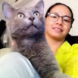 Looking For a Pet Sitter Job in Brooklyn, New York