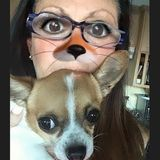 Most Hardworking House and Pet Sitter in Laguna vicinity