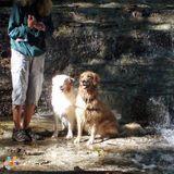Dog Walker in Canandaigua