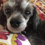 Dog Walker Job, Pet Sitter Job in Lindsay