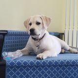 Full Time Dog Sitter