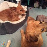 Dog Walker, Pet Sitter in Caledon