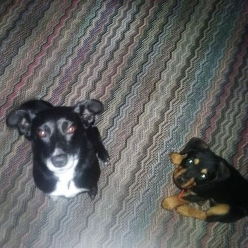 House Sitter Provider Angela A's Profile Picture