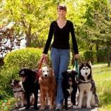 Dog Walker in Roosevelt Island
