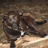 Dog Walker Job, Pet Sitter Job in Poulsbo
