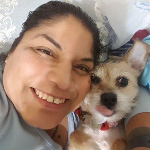 Pet Care Provider Dolores Ochoa's Profile Picture