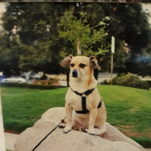 Pet Care Provider Lilly S's Profile Picture