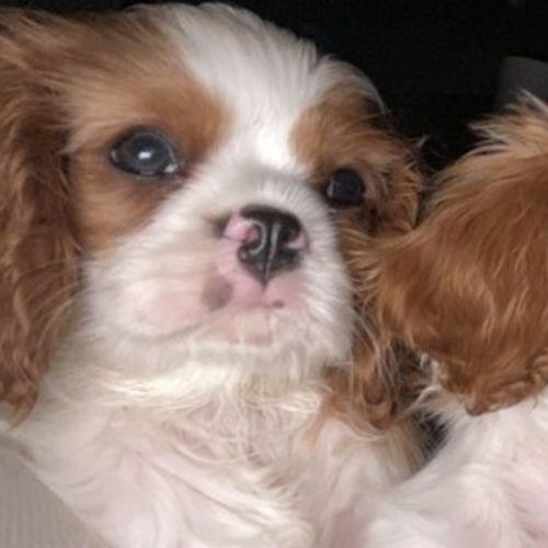 Pet Care Job Dee- overnight care a must B's Profile Picture