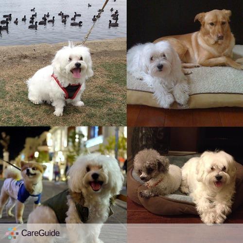 Pet Care Provider Toto To's Profile Picture
