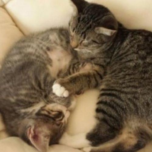 Pet Care Provider Paula P Gallery Image 3