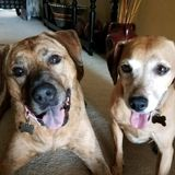 Searching for Caring and Fun Dog Walker for 2 Very Sweet Pups