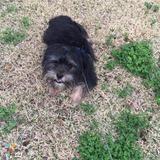 Dog Walker Job, Pet Sitter Job in Lafayette