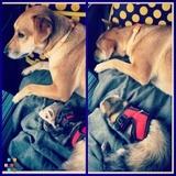 Dog Walker, Pet Sitter in Daphne
