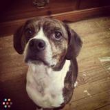 Dog Walker, Pet Sitter in Mechanicsville