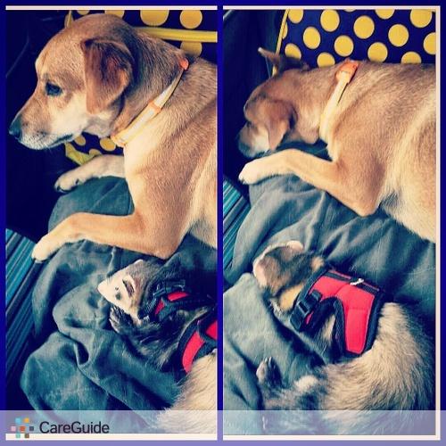 Pet Care Provider Claire Miller's Profile Picture