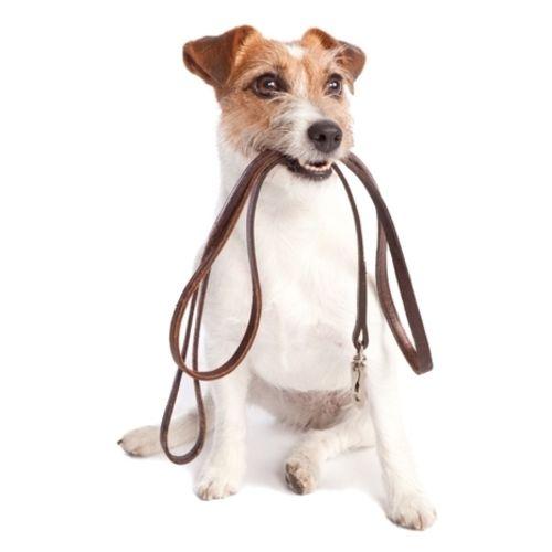 Pet Care Provider Happy At Home Petsitters Toronto C Gallery Image 3
