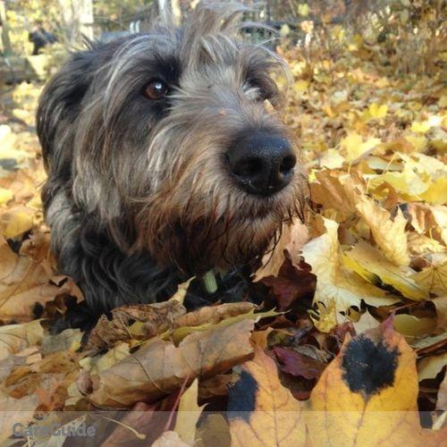 Pet Care Provider Alyssa U's Profile Picture