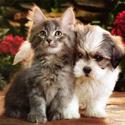 Experienced Pet Sitter. I love working with pets! I will take care of your pets and show them much love!