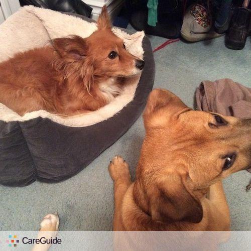 Pet Care Provider Meirav Gilad's Profile Picture