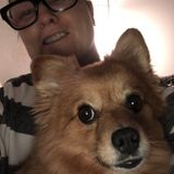 I have a Pomchi named Foxy that is 6 years old and I would love to play and walk your puppy