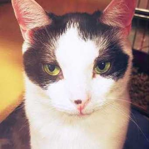 Pet Care Provider Karla C Gallery Image 1