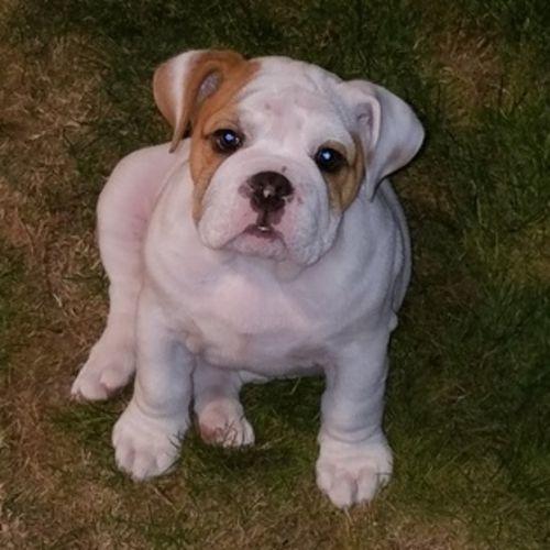 Pet Care Provider Terry H's Profile Picture