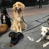 Dog Walker, Pet Sitter in Whitby
