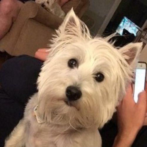 Pet Care Job Tara J's Profile Picture