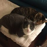 Pet Sitter Job in Hubert