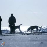 Dog Walker in Toronto