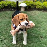 Seasoned Dog Sitter in Palm Harbor