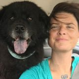 Professional Pet Sitter/Handler, Jacksonville Jobs