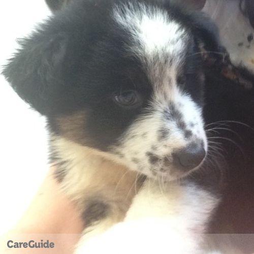 Pet Care Job Elisabeth Hackworth's Profile Picture