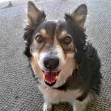 Dog Walker, Pet Sitter in Peralta
