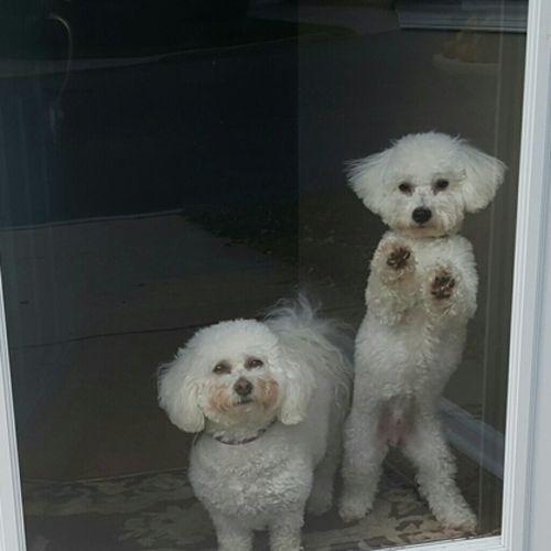 Pet Care Provider Lisa D's Profile Picture