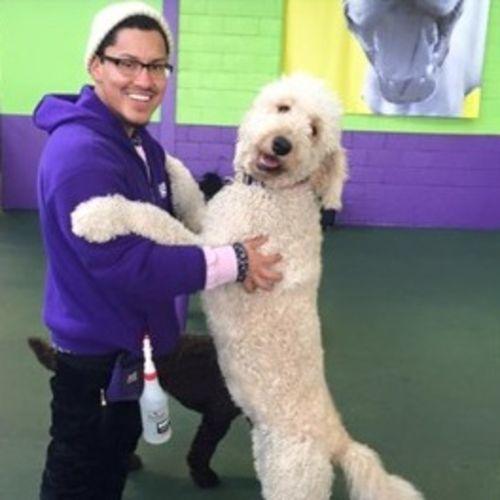 Pet Care Provider Edward M's Profile Picture