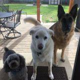 Bellas Bark N Strut dog walking services