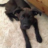 Dog Walker, Pet Sitter in Highland
