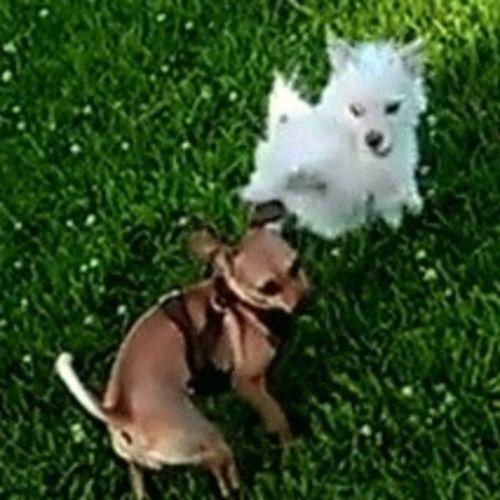 Pet Care Provider Daryl R's Profile Picture