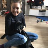Interested In a Pet Care Provider Job in Banff