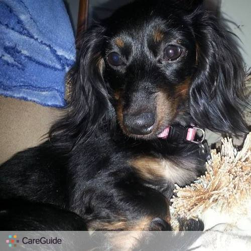 Pet Care Provider Julie H's Profile Picture