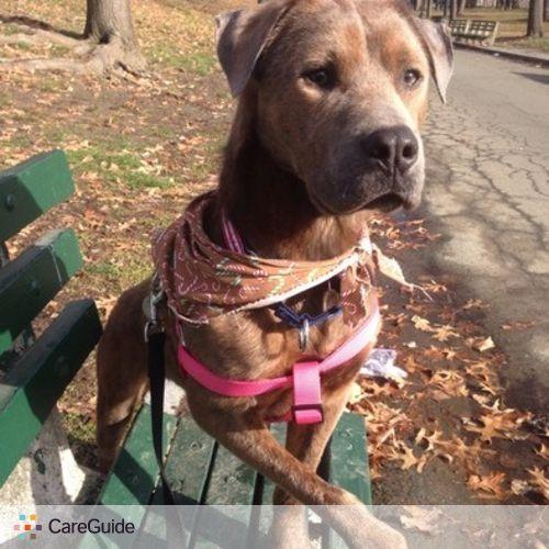 Pet Care Provider Roberto Leon's Profile Picture