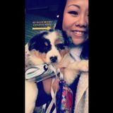 Dog Walker, Pet Sitter in Perry
