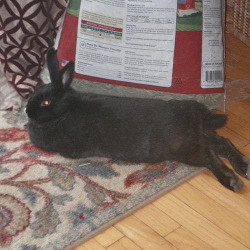 Pet Care Provider Suzanne Corker's Profile Picture