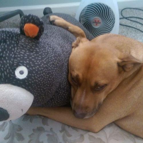 Pet Care Job Monica Hodge's Profile Picture