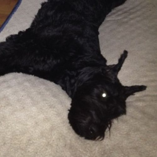 Pet Care Job Natalya K's Profile Picture