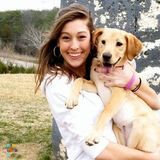 Dog Walker, Pet Sitter in Greenville