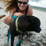 Available: Hardworking Pet Trainer in Land O Lakes, Florida