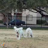 Dog Walker, Pet Sitter in Nogales
