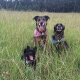 Dog Walker, Pet Sitter in Summerville